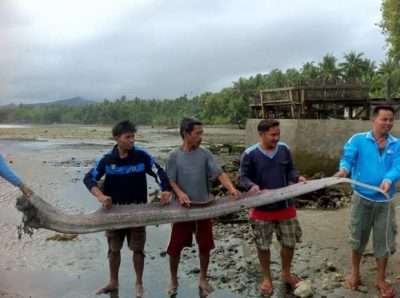 риб 1