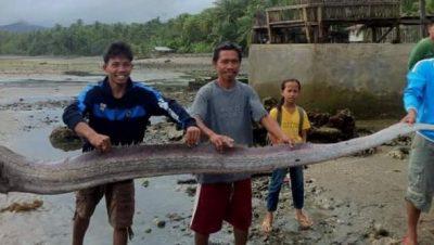 риба тит