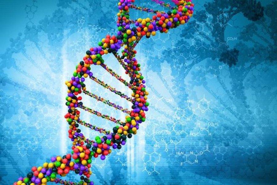 определение фрагмента ДНК